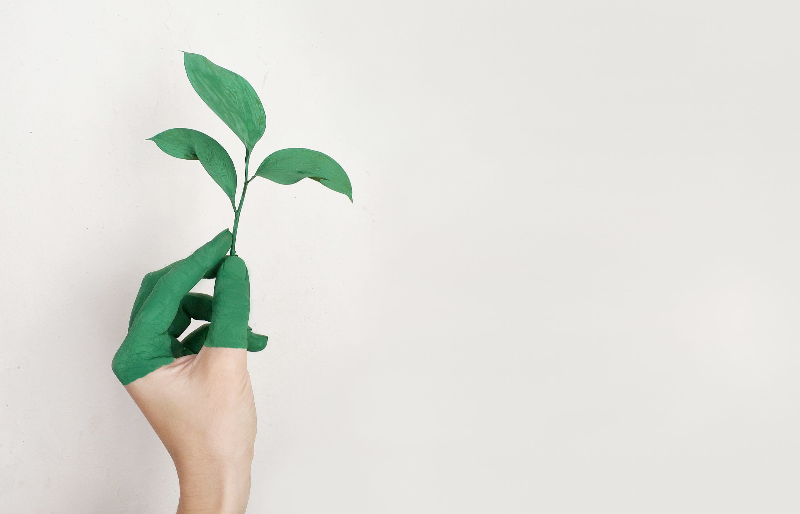 4sustainability greenwashing scaled 1