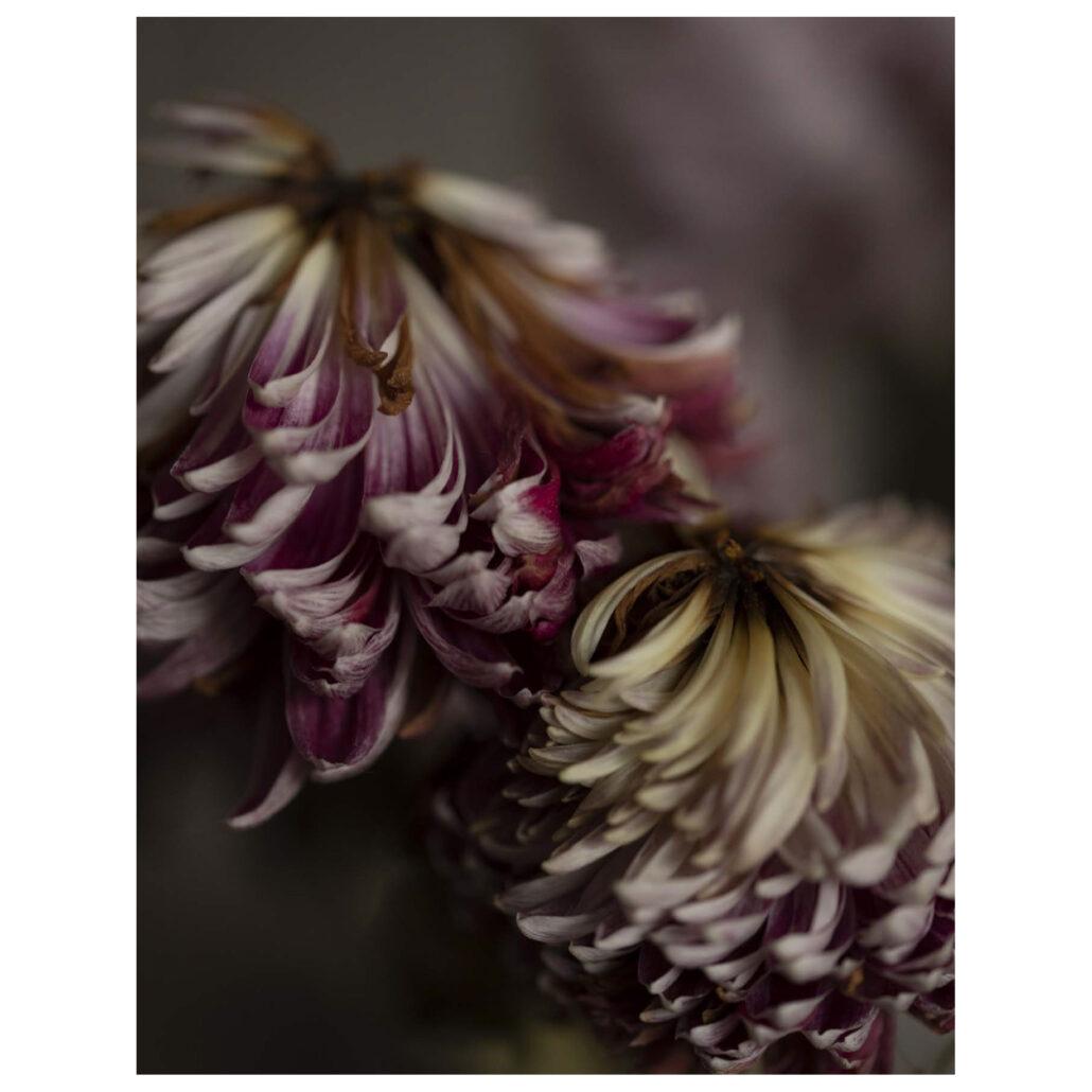 03 fiore2b